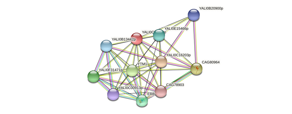 XP_501338.1 protein (Yarrowia lipolytica) - STRING interaction network