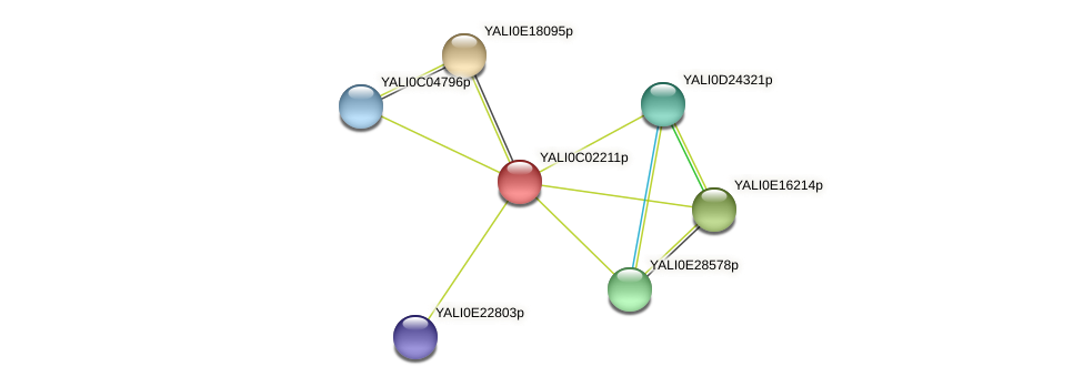 XP_501351.1 protein (Yarrowia lipolytica) - STRING interaction network