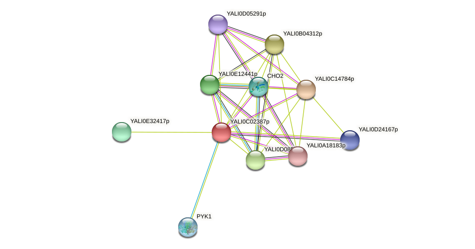 XP_501357.1 protein (Yarrowia lipolytica) - STRING interaction network