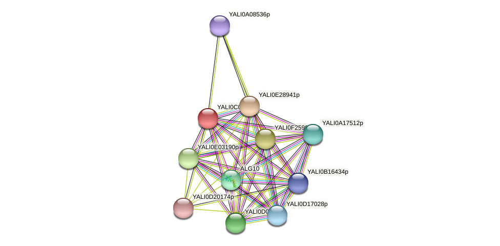 XP_501361.1 protein (Yarrowia lipolytica) - STRING interaction network