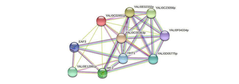 XP_501369.1 protein (Yarrowia lipolytica) - STRING interaction network