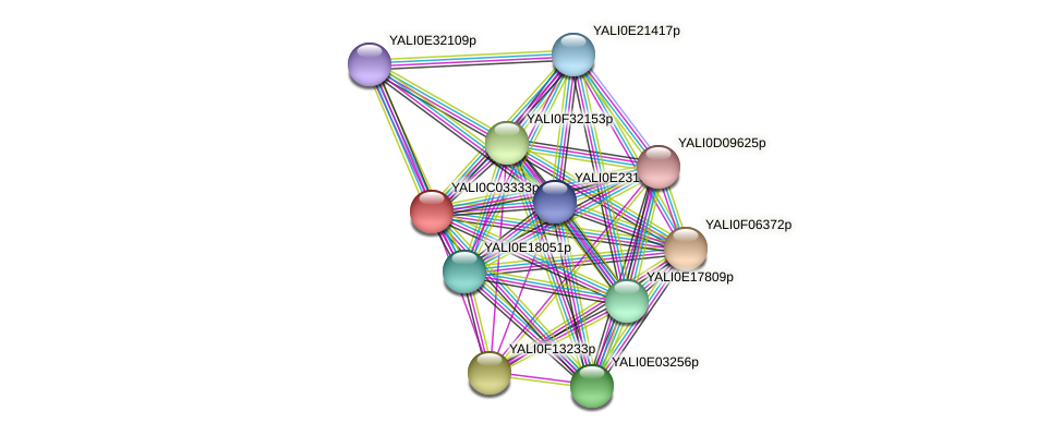 XP_501393.1 protein (Yarrowia lipolytica) - STRING interaction network