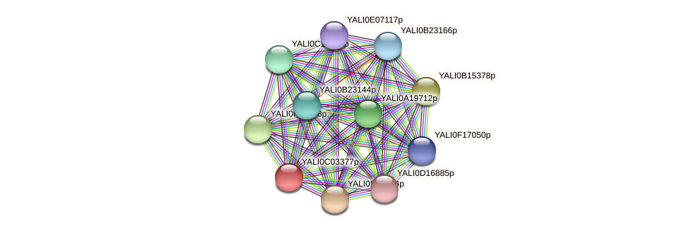 XP_501395.1 protein (Yarrowia lipolytica) - STRING interaction network
