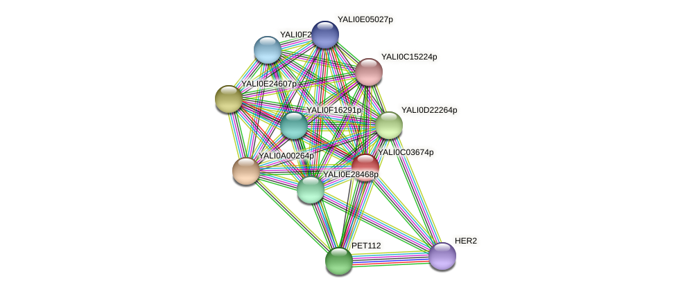 XP_501409.1 protein (Yarrowia lipolytica) - STRING interaction network