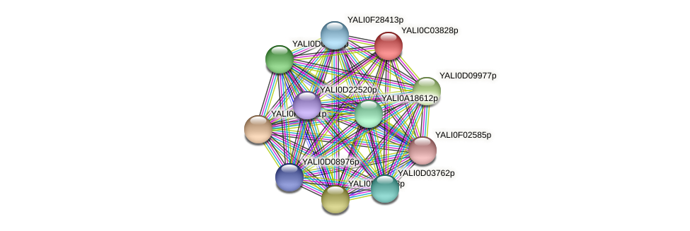 XP_501415.1 protein (Yarrowia lipolytica) - STRING interaction network