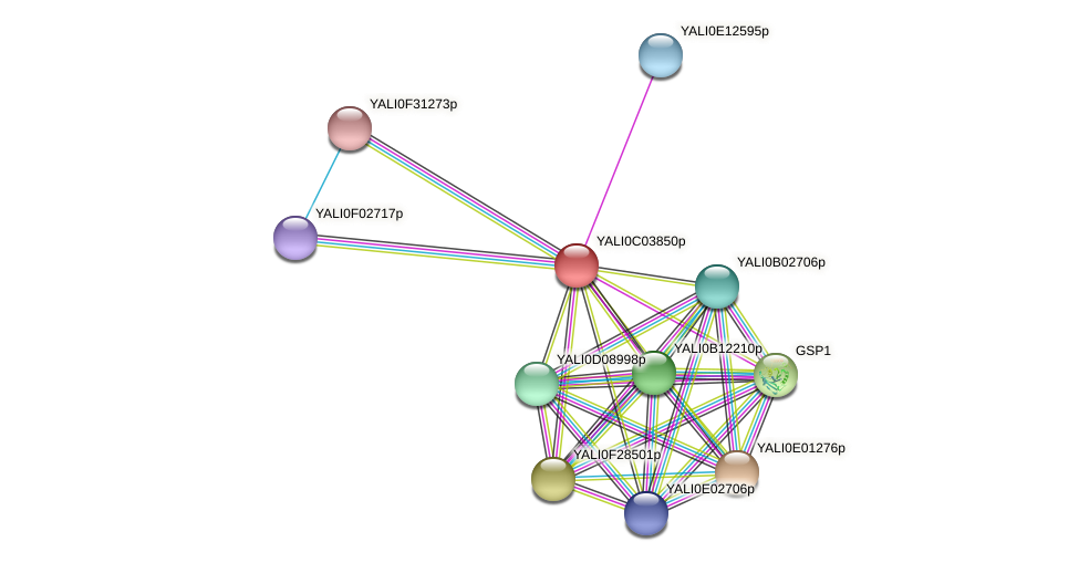 XP_501416.1 protein (Yarrowia lipolytica) - STRING interaction network