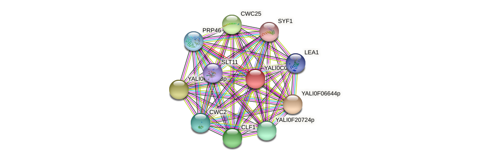 XP_501420.1 protein (Yarrowia lipolytica) - STRING interaction network