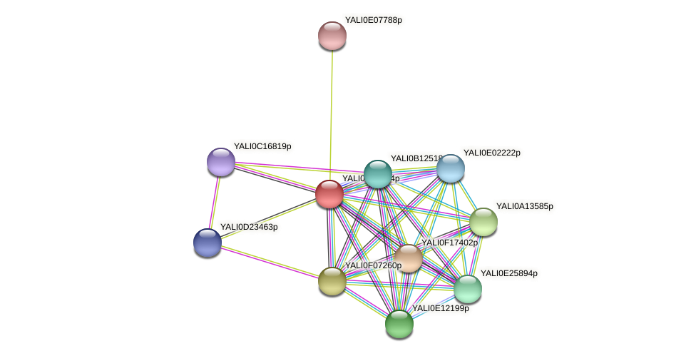 XP_501421.1 protein (Yarrowia lipolytica) - STRING interaction network