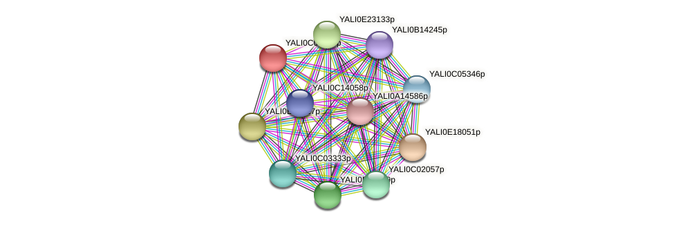 XP_501424.1 protein (Yarrowia lipolytica) - STRING interaction network