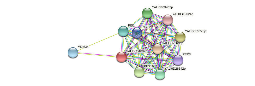 XP_501425.1 protein (Yarrowia lipolytica) - STRING interaction network