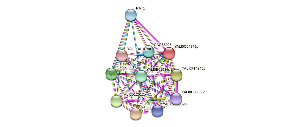 XP_501437.1 protein (Yarrowia lipolytica) - STRING interaction network