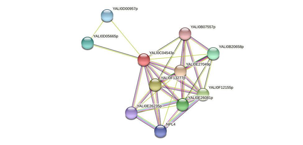 XP_501446.1 protein (Yarrowia lipolytica) - STRING interaction network
