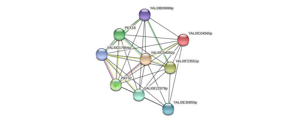 XP_501447.1 protein (Yarrowia lipolytica) - STRING interaction network