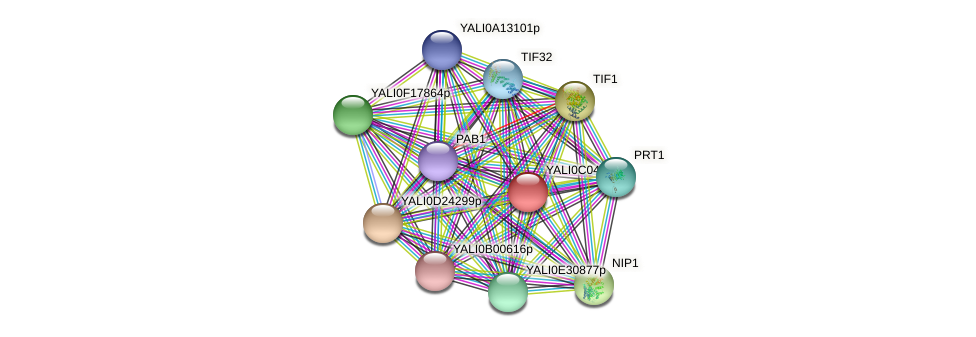 XP_501450.1 protein (Yarrowia lipolytica) - STRING interaction network
