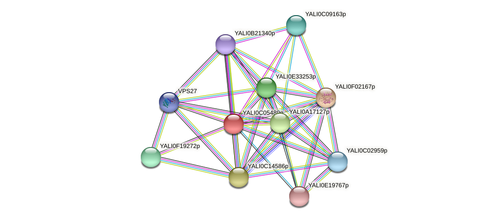 XP_501475.1 protein (Yarrowia lipolytica) - STRING interaction network