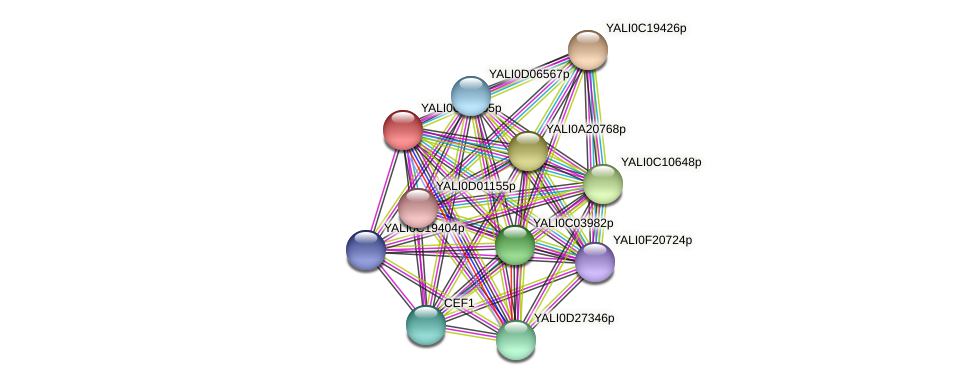 XP_501478.1 protein (Yarrowia lipolytica) - STRING interaction network