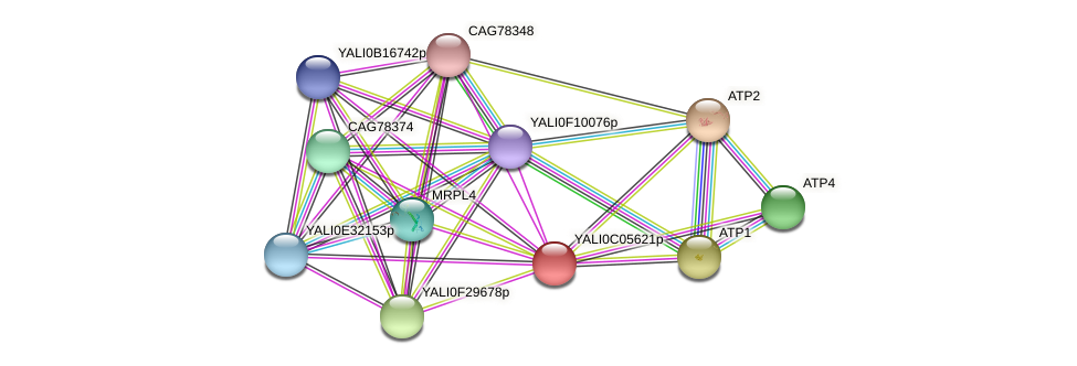 XP_501481.1 protein (Yarrowia lipolytica) - STRING interaction network