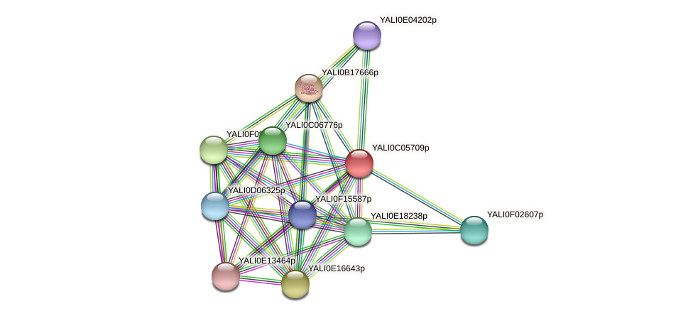 XP_501485.1 protein (Yarrowia lipolytica) - STRING interaction network