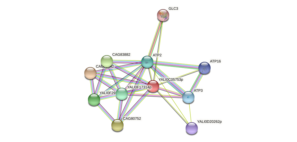 XP_501487.1 protein (Yarrowia lipolytica) - STRING interaction network