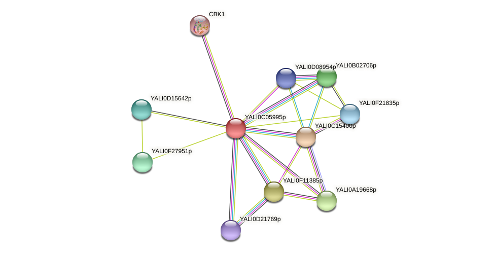 XP_501498.1 protein (Yarrowia lipolytica) - STRING interaction network