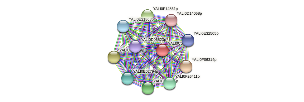 XP_501500.1 protein (Yarrowia lipolytica) - STRING interaction network