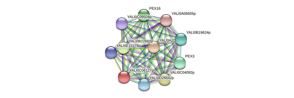 XP_501504.1 protein (Yarrowia lipolytica) - STRING interaction network