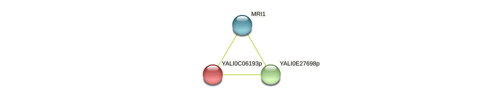 XP_501507.2 protein (Yarrowia lipolytica) - STRING interaction network