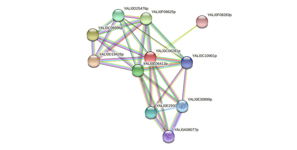XP_501511.1 protein (Yarrowia lipolytica) - STRING interaction network