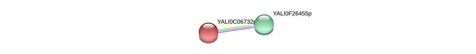 XP_501528.1 protein (Yarrowia lipolytica) - STRING interaction network