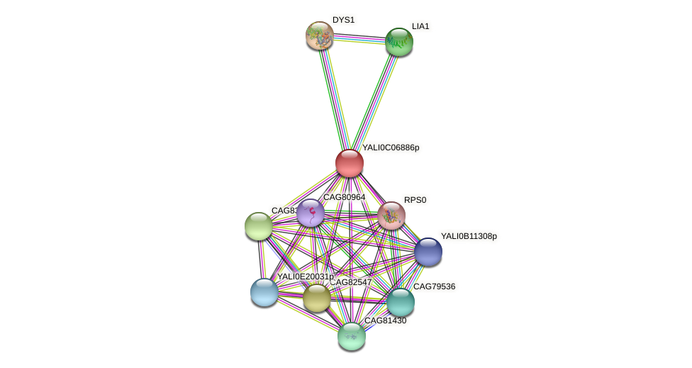 XP_501535.2 protein (Yarrowia lipolytica) - STRING interaction network