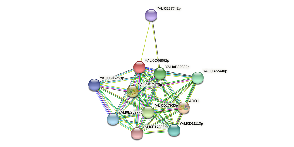 XP_501538.1 protein (Yarrowia lipolytica) - STRING interaction network