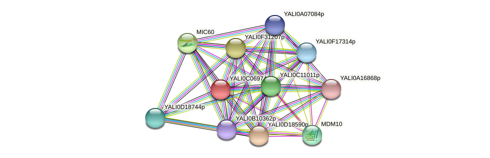 XP_501539.2 protein (Yarrowia lipolytica) - STRING interaction network