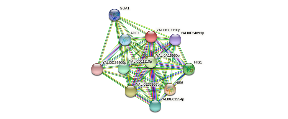 XP_501544.1 protein (Yarrowia lipolytica) - STRING interaction network