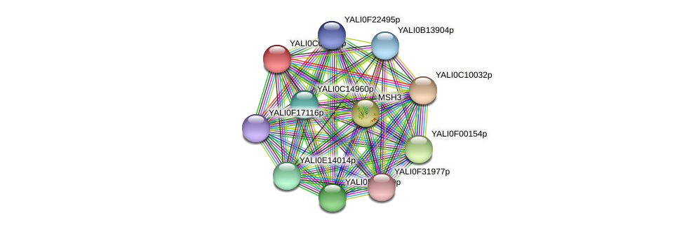 XP_501549.1 protein (Yarrowia lipolytica) - STRING interaction network