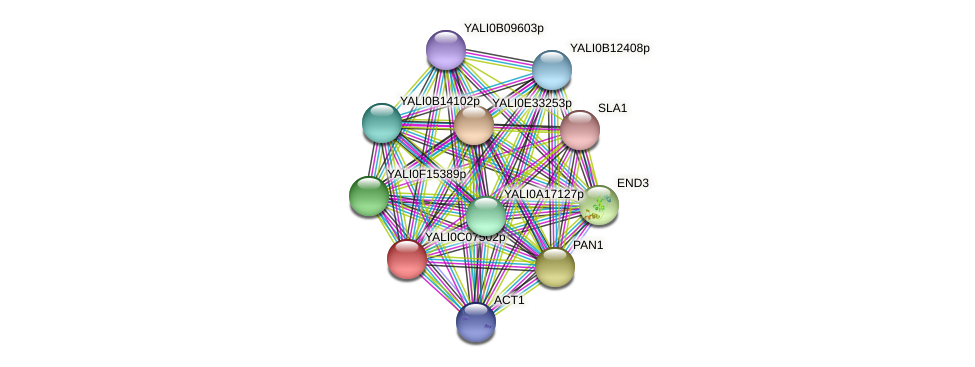 XP_501558.1 protein (Yarrowia lipolytica) - STRING interaction network
