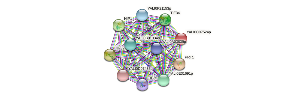 XP_501559.1 protein (Yarrowia lipolytica) - STRING interaction network