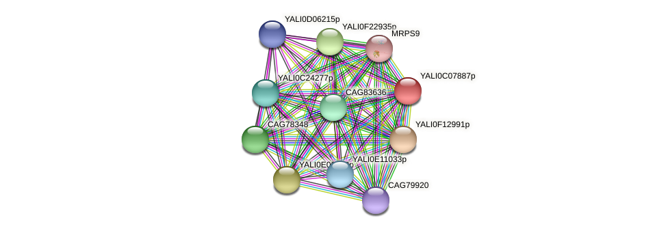 XP_501575.1 protein (Yarrowia lipolytica) - STRING interaction network
