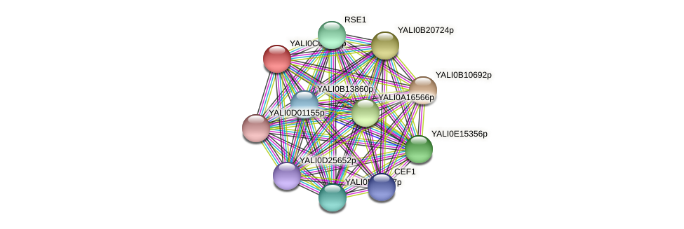 XP_501580.1 protein (Yarrowia lipolytica) - STRING interaction network