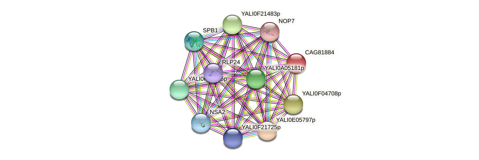 XP_501581.1 protein (Yarrowia lipolytica) - STRING interaction network