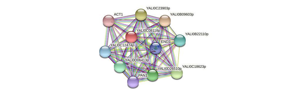 XP_501584.1 protein (Yarrowia lipolytica) - STRING interaction network