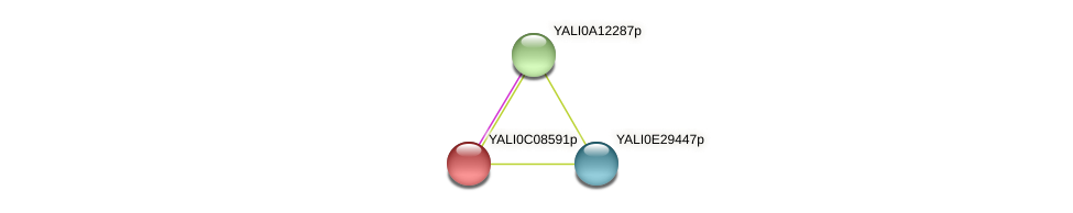 XP_501605.1 protein (Yarrowia lipolytica) - STRING interaction network
