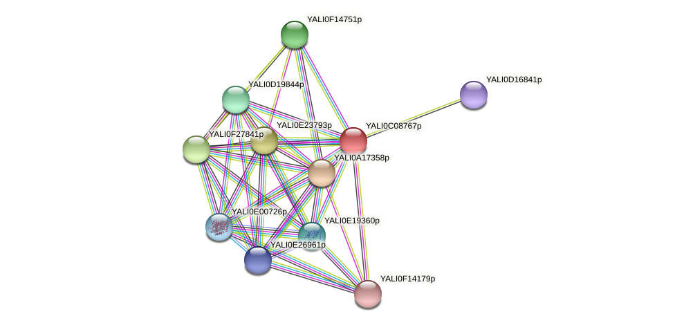 XP_501613.1 protein (Yarrowia lipolytica) - STRING interaction network