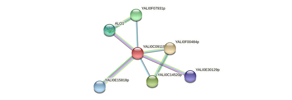 XP_501627.1 protein (Yarrowia lipolytica) - STRING interaction network