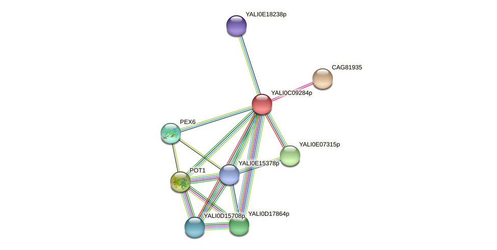 XP_501636.1 protein (Yarrowia lipolytica) - STRING interaction network