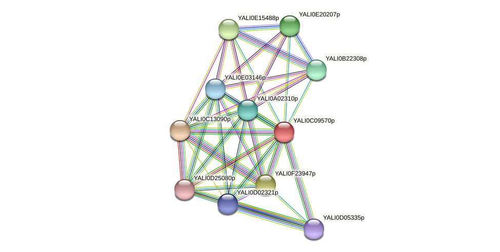 XP_501647.1 protein (Yarrowia lipolytica) - STRING interaction network