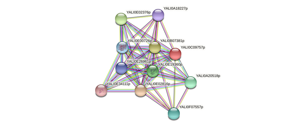 XP_501654.1 protein (Yarrowia lipolytica) - STRING interaction network