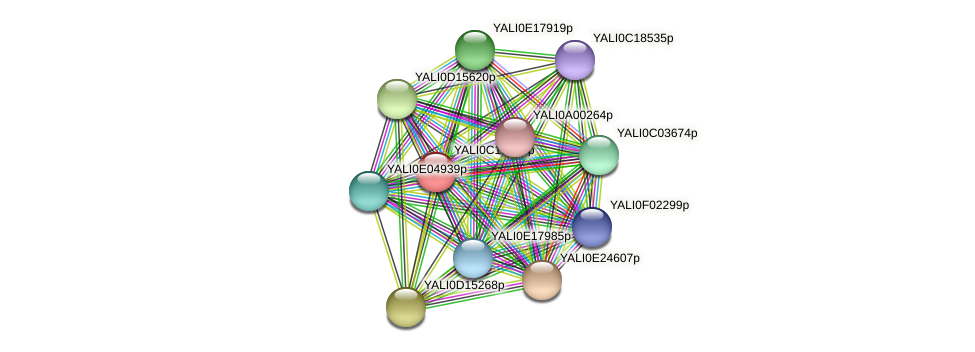 XP_501693.1 protein (Yarrowia lipolytica) - STRING interaction network