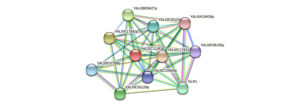 XP_501719.1 protein (Yarrowia lipolytica) - STRING interaction network