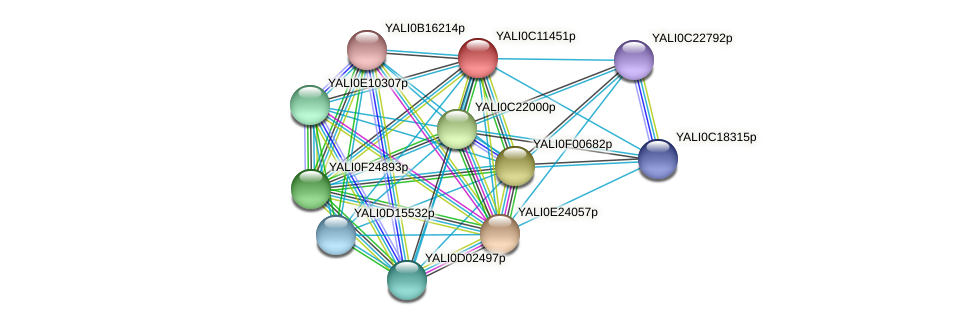 XP_501723.2 protein (Yarrowia lipolytica) - STRING interaction network