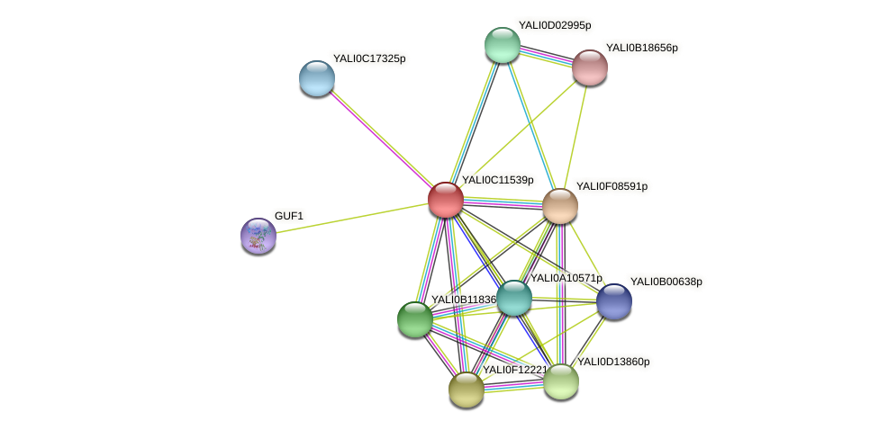 XP_501727.1 protein (Yarrowia lipolytica) - STRING interaction network